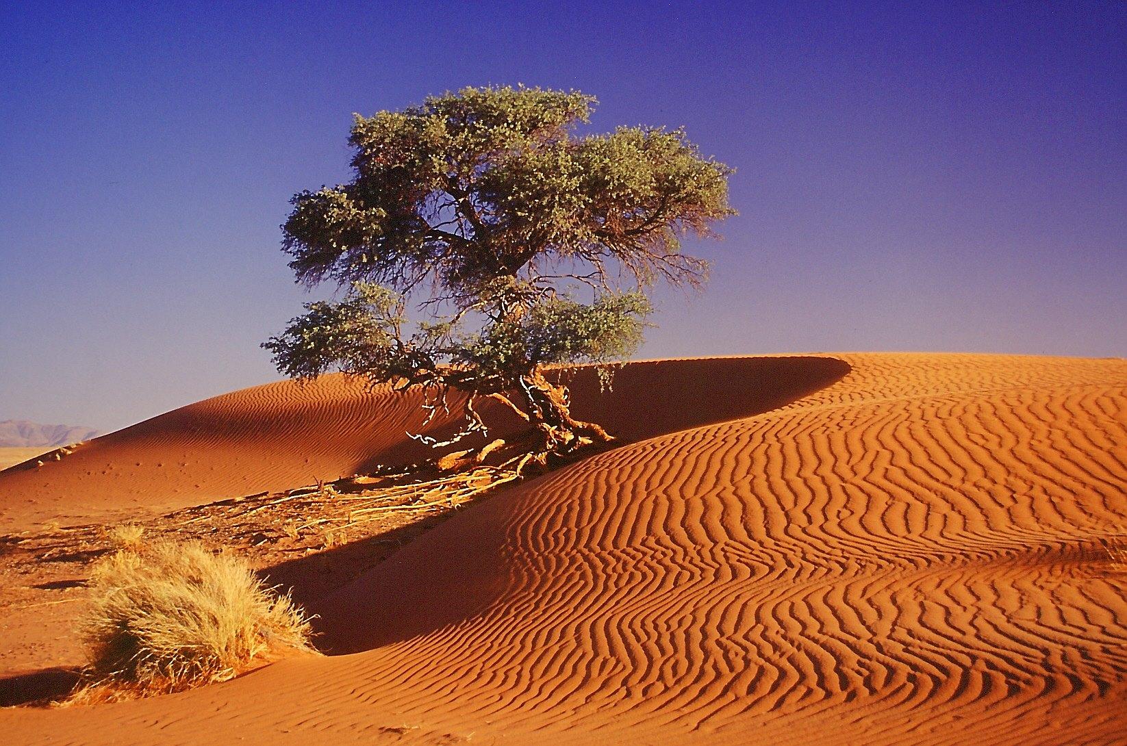 NAM_F_Namib_5