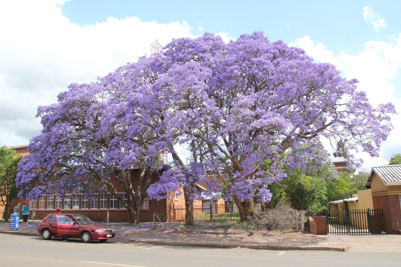SA_A_Soweto_4