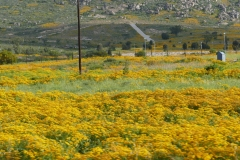 SA_Namaqualand_2